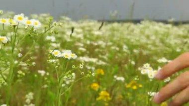 Pole kwiatów — Wideo stockowe