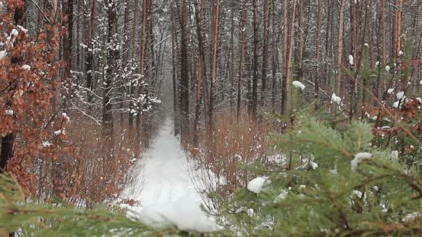 Nieve cayendo en el parque — Vídeo de stock