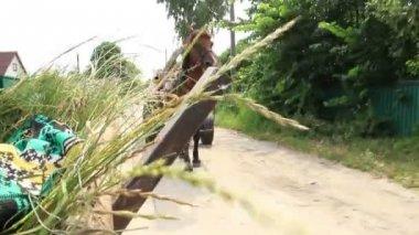 лошадь тележки, несущие травы и люди — Стоковое видео