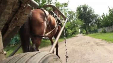 Harnessed horse carries wheel cart — Stock Video