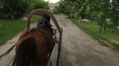 Horse carrying cart — Stock Video
