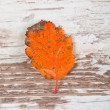 Autumn leaf — Foto Stock #37489317