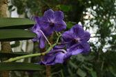 Orchideeën bloem — Stockfoto