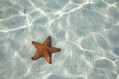 Starfish on the bottom — Stockfoto