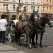 Stock Photo: Two horses and the carrier