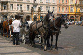 Two horses and the carrier — Stock Photo