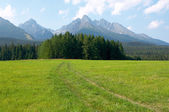 Green meadow with a kind on mountains High Tatra — Stock Photo