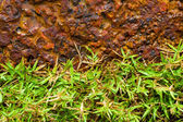 Brown Stone and green grass — Stock Photo