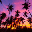 Coconut palm tree silhouette — Stock Photo #37959993
