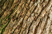 Old tree texture — Stock Photo