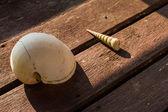 Seashell on old wooden — Stock Photo