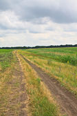 Country road in the field — Stockfoto