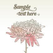 хризантема цветочная поздравительная открытка — Cтоковый вектор