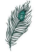 Beautiful peacock feather — Vector de stock