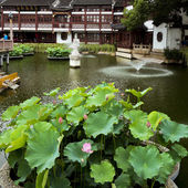 Traditional Garden, Shanghai — Foto de Stock