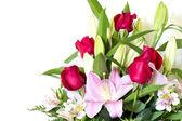 Blomma — Stockfoto