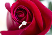 Jewelry, red rose — Stockfoto