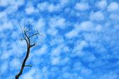Cielo, la belleza de la naturaleza — Foto de Stock