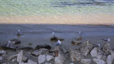 Gulls on the beach — Video Stock