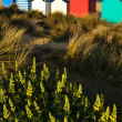 Stock Photo: Colourful beach huts on Southwold beach Suffolk