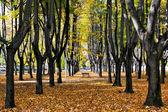 Autumn colours in Parco di Monza Italy — Stock Photo