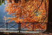 Autumn scene at the Lake in Parco di Monza Italy — Stock Photo