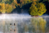 Early morning at Weir Wood Reservoir — Stock Photo