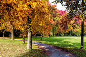 Autumn tints in Parco di Monza Italy — Stock Photo