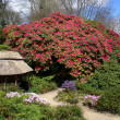 Stock Photo: Magnificent Rhododendron
