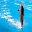 Dolphin show at Loro Parque — Stock Photo #38315915