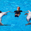 Stock Photo: Dolphin show