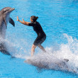 Dolphin show at Loro Parque — Stock Photo #38316507