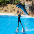 Dolphin show — Stock Photo #38316579