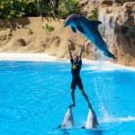 Dolphin show — Stock Photo #38316579
