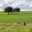Stock Photo: Arable farming field near Munlochy