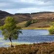 Stock Photo: Loch Tarff