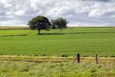 земледелие поле возле munlochy — Стоковое фото
