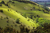 Rolling Sussex countryside — Stock Photo