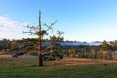 Matakohe countryside — Stock Photo