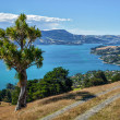 Stock Photo: Otago Peninsula