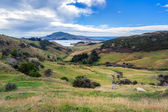 Otago peninsular — Stock Photo