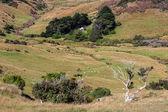 Otago Peninsula — Stock Photo