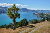 Otago Peninsula — Foto Stock