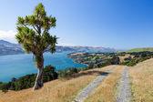 Otago Peninsula — Stockfoto