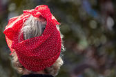 Lady wearing a polkadot silk scarf on her head at the Goodwood R — Stock Photo