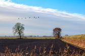 Krajobraz w pobliżu ely — Zdjęcie stockowe