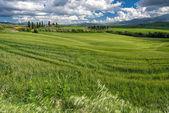 Farmland in Val d'Orcia Tuscany — Stock Photo