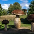 Stock Photo: Tom Hare's Fungi Fairy Ring