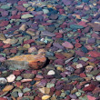 Stock Photo: Colourful Stones in Lake McDonald