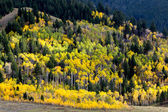 Autumn Colours in Wyoming — Stock Photo